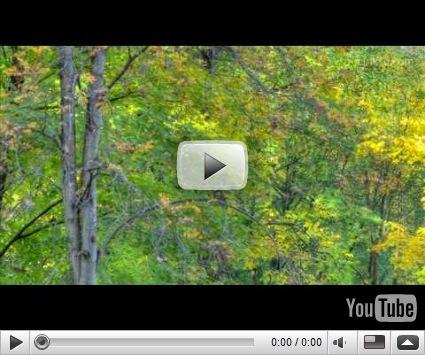 """Los """"casi"""" 365 días del 2008 en un vídeo de 40 segundos ceslava 1"""